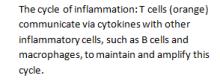 cytocines
