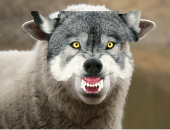sheep in wolf